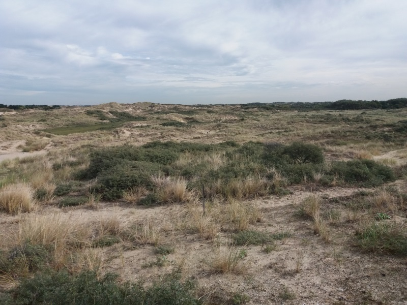 33_duinen in Holland
